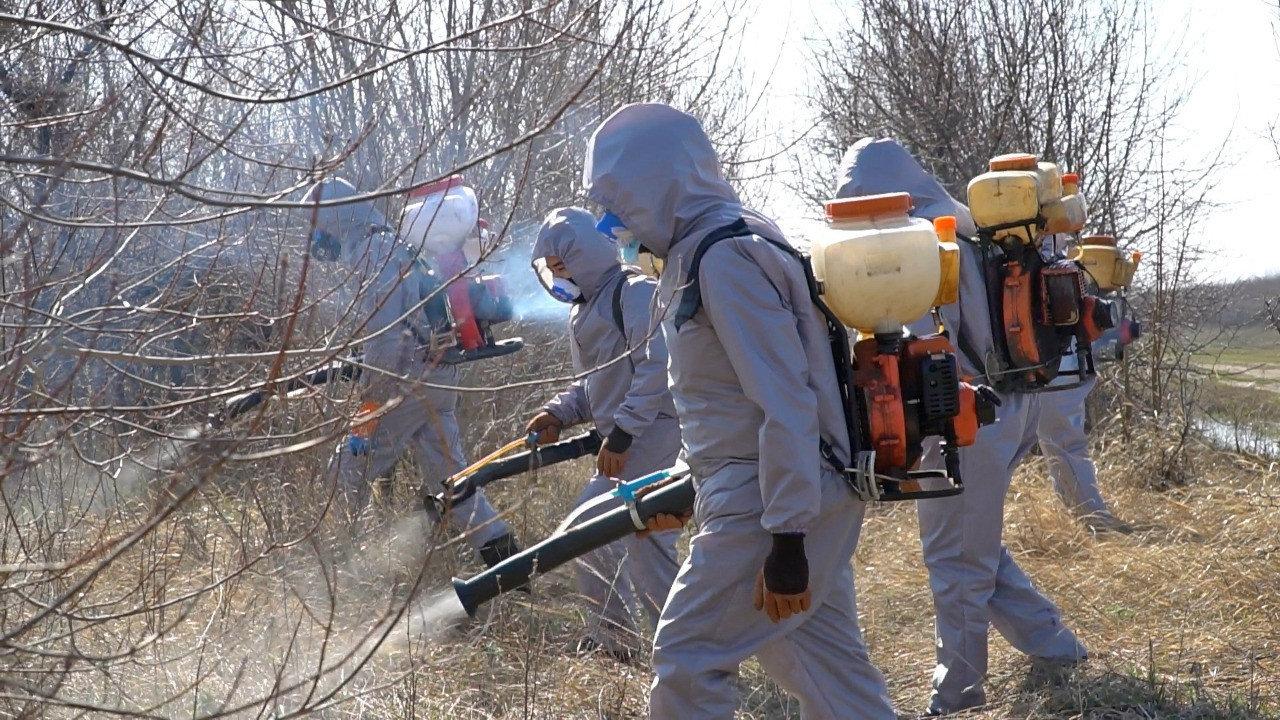 Дезинсекционные работы против комаров продолжаются в Нур-Султане, фото-2