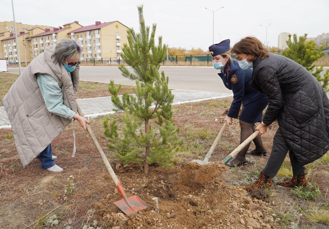 Деревья высадили ко Дню учителя в Нур-Султане, фото-1
